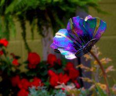 PoppyBlackMagic by Craig Mitchell Smith Tin Can Flowers, Glass Flowers, Metal Flowers, Tin Can Crafts, Botany, Fused Glass, Sculpture Art, Poppies, Glass Art