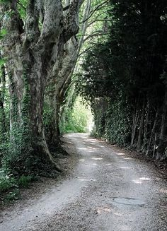 ✯ This road leads to Noves, France from Moulin de la Rocque