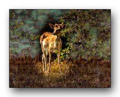 Oldrobel's Fotoreise: Fallow deer on forest edge