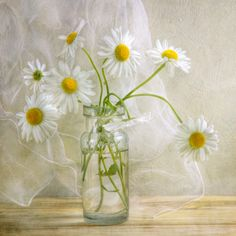 I Love Daisies...so sweet and simple