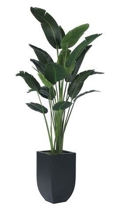 Houseplants That Filter the Air We Breathe Tree Master, - Ihfc, Commerce, Floor Tree_Masters