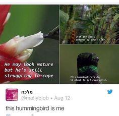 Hummingbird is having a hard time adulting 😂