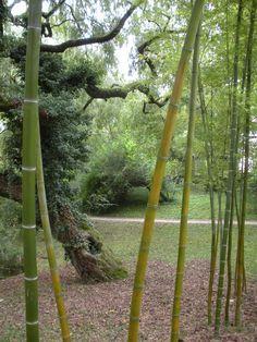 From Bothanical Garden, Strasbourg