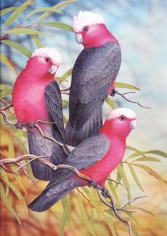 'Australian Galahs' (Rose-Breasted Cockatoos) Watercolour & Gouache Artist: Lyn Cooke