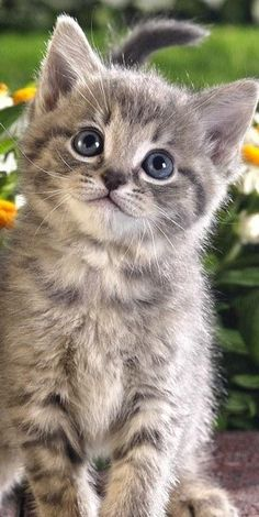 Purr-fectly cute kitten!