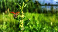 #ladybug #sgs6