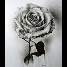 Black and White Rose pencil sketch. Josh Beatson