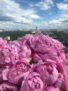 Nature Wallpaper, Fruit, Rose, Plants, Destinations, Photography, Beautiful, Fashion, Paisajes