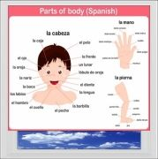 Parts Of The Body Spanish Digitally Printed Photo Roller Blind