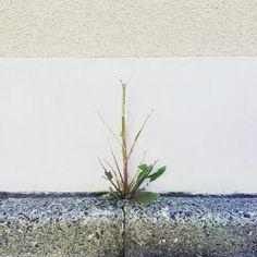 雑草 weed THE草