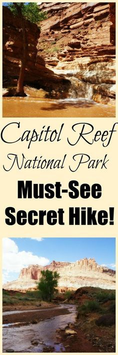 Make your plans to visit Capitol Reef right now because this is one of the most fun hikes you will ever do!