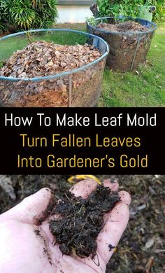 How To Make Leaf Mold: Turn Fallen Leaves Into Gardener's Gold Leaf Compost, Compost Soil, Garden Compost, Garden Soil, Edible Garden, Garden Beds, Garden Benches, Fruit Garden, Worm Composting