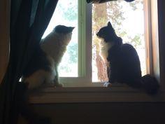 I love my babies  Miss. Stache (tuxedo) and Monster (gray and white) http://ift.tt/2sINeJG