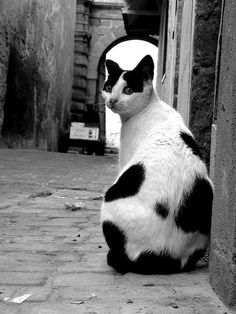 Chat - ruelle