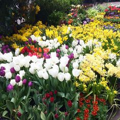 The beauty of flower market walk today! Spring has sprung!!!!