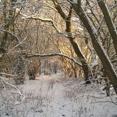 Min vinterhave nede i hasselnøddeskoven.