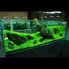 Aquarium Garden, Aquarium Stand, Nature Aquarium, Aquarium Fish Tank, Planted Aquarium, Aquascaping, Discus Tank, Fish Tank Design, Pisces