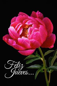55 Ideas for flowers peonies shape Flowers Nature, Pink Flowers, Beautiful Flowers, Beautiful Soup, Exotic Flowers, Beautiful Gorgeous, Pink Peonies, Yellow Roses, Pink Roses