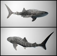 Marvelous Drawing Animals In The Zoo Ideas. Inconceivable Drawing Animals In The Zoo Ideas. Whale Shark Tattoo, Whale Tattoos, Whale Sharks, Whales, Ocean Sleeve, Shark Drawing, Shark Facts, Tattoo Project, Animal Drawings
