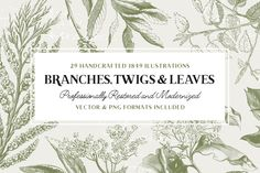 29 Branches, Twigs, & Leaves by vector.hut on @creativemarket