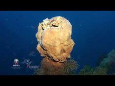 Scoperto sito idrotermale con 200 camini alle Eolie Video