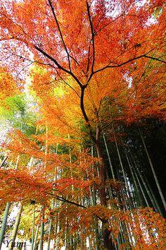 autumn leaves    #autumn #leaves #fall #foliage