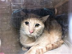 URGENT! Justin 21958 JUSTIN and JESSE were found in a garage and were brought to the shelter. Jesse is a bit upset and needs a home asap.