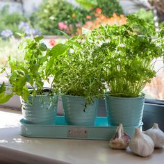 Does Mum love to cook? All her favourite herbs will be close at hand with this Sophie Conran Herb Pot in Blue, a lovely addition to the kitchen windowsill.