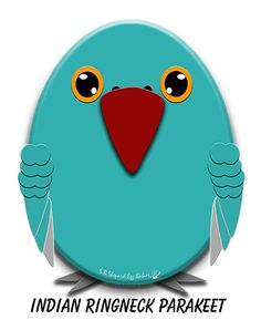 New Female Blue Indian Ringneck Parakeet products on #CafePress http://www.cafepress.com/birdnerdsdigitaldesign/10802086 #parrots #birdnerds #indianringneck #IRN