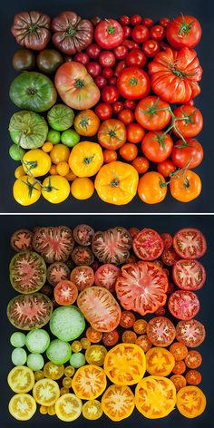 Tomato Gardening Tips: If you ask any experienced gardener, they will probably tell you that tomatoes are among the easiest things to grow. Tomato Garden, Vegetable Garden, Fruit And Veg, Fruits And Vegetables, Heirloom Tomatoes, Growing Tomatoes, Autumn Garden, Gardening Tips, Vegetable Gardening