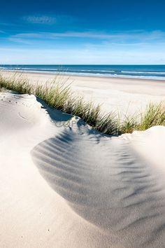 Vom Winde verweht. Herrliche Sandwellen vor feinem Strandhafer in unberührter Natur / Langeoog Impression / Nordsee / Insel / Nordseeinsel / Strand / Nordseestrand / Dünen