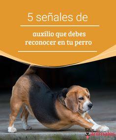 5 señales de auxilio que debes reconocer en tu perro Aprende a reconocer las distintas señales de auxilio que da tu perro y que puedes llegar a confundir con actitudes graciosas. #salud #auxilio #señales #actitud