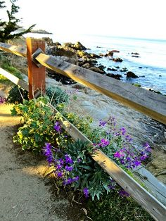 Wildflowers along the Monterey Bay Coastal Recreation Trail