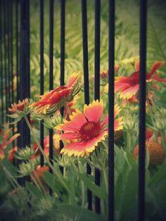 Flower and garden @ disney