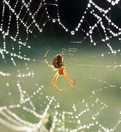 Receita para limpar a casa e espantar as aranhas