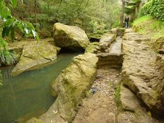 Concrete Path, Gravel Path, Running Horses, Trail Running, Mountain Bike Trails, Hiking Trails, Fern Forest, New South, South Wales