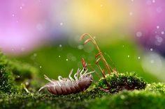 By Nadav Bagim     #insect #macro #nature      http://rosphoto.com/a_nadav_bagim