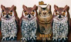owl cat cheezbrgr