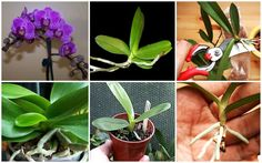 How to Propagate Orchid Easily at Home | www.FabArtDIY.com