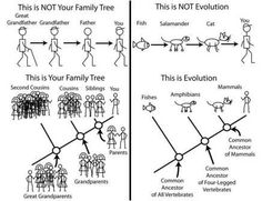 My family cladogram!