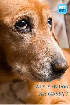 Is your dog so gassy that people don't believe you anymore when you blame the dog?