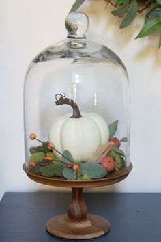 Easy fall decorating idea - pumpkin in cloche! Add a cloche with a wooden base, moss, a faux pumpkin and berries plus foliage for a cozy feel! Thanksgiving Diy, Thanksgiving Decorations, Seasonal Decor, Halloween Decorations, Holiday Decor, Autumn Decorating, Pumpkin Decorating, Interior Decorating, Cloche Decor
