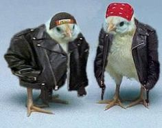 Biker Chicks.....lol @Brenda Galeas this will be us on Saturday!!!