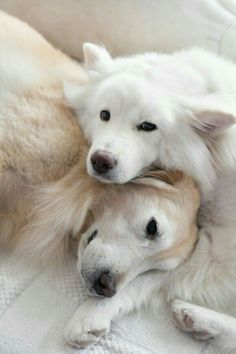 Funny Animal Pictures - View our collection of cute and funny pet videos and pics. New funny animal pictures and videos submitted daily. Beautiful Dogs, Animals Beautiful, Beautiful Creatures, Beautiful Images, Cute Puppies, Dogs And Puppies, Adorable Dogs, Pet Dogs, Dog Cat