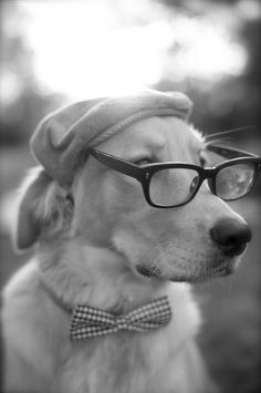 The Professor | blonde labrador | dress ups | bow tie | black & white photography | refined | composed | mans best friend | dog