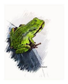 Frog on a Bucket by artist Rhondi Perdue. Giclee prints, art prints, animal art, a frog perched on the edge of a bucket; from an original  drawing; frog art