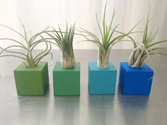 Air Plant Magnets - Set of 4 Magnets - Shades of Blue and Green Magnets on Etsy, $20.00