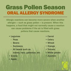 Your grass allergy can cause reactions to certain foods, too. Sublingual immunotherapy can help to eliminate symptoms all together. Oral Allergy Syndrome, Allergy Symptoms, Banana Allergy, Grass Allergy, Food Allergies, Seasonal Allergies, The Daniel Plan, Allergy Medicine