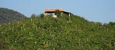 Hills of Valdobbiadene in Veneto region (Italy)