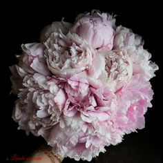 Buchetul Adinei #wedding #bouquet #madewithjoy #paulamoldovan #livadacuvisini #peony #peonies #peonieslovers #pink #flowers #buchet #bujori #nunta #cununie Peony, Nasa, Pink Flowers, Wedding Bouquets, Wedding Ideas, Wedding Brooch Bouquets, Bridal Bouquets, Peonies, Wedding Bouquet